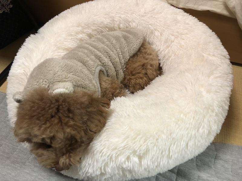 犬用ベッドの画像