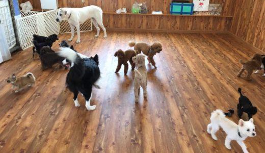 犬の幼稚園ってどうなの?「K9 わん's アゴラ」に行ってきたら愛犬が楽しそうで涙【松山市情報】