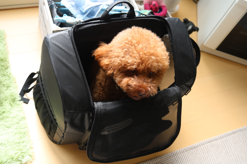 airbuggyバックパックの写真