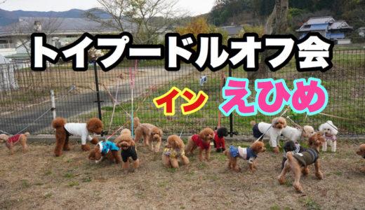 犬のオフ会を開催しよう【企画や準備方法】