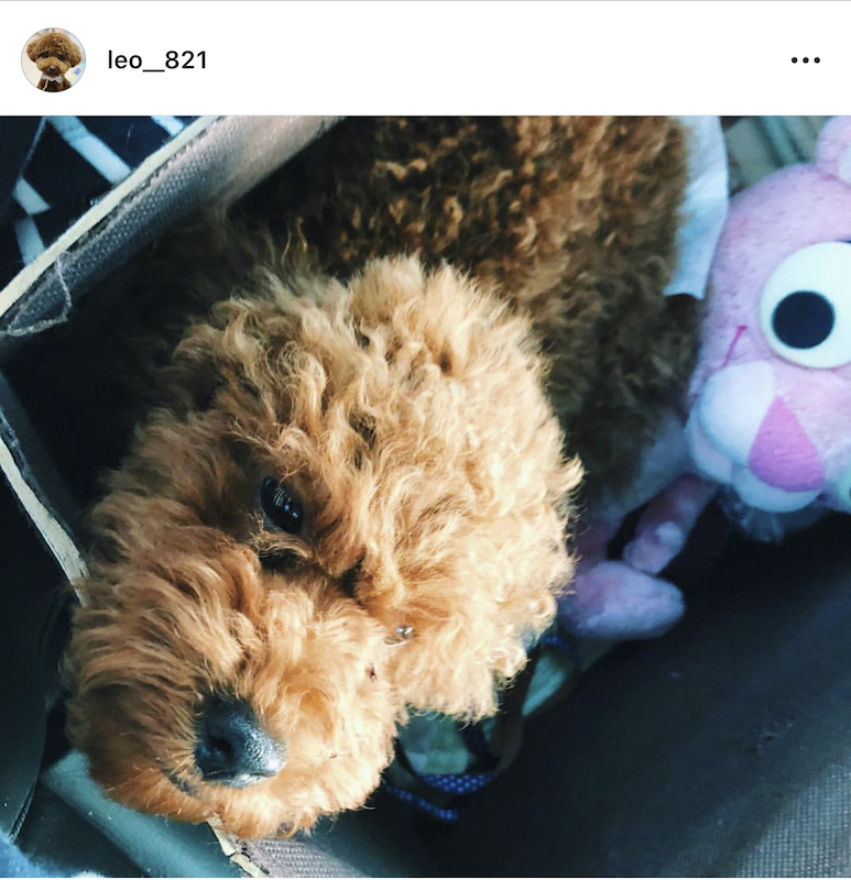 Instagramの初めての投稿の写真