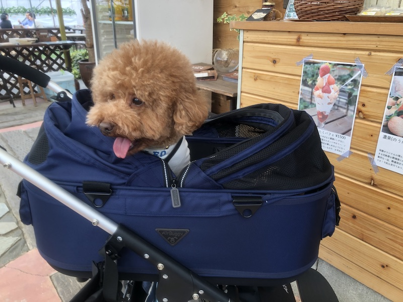 エアバギーに乗っているレオさんの写真