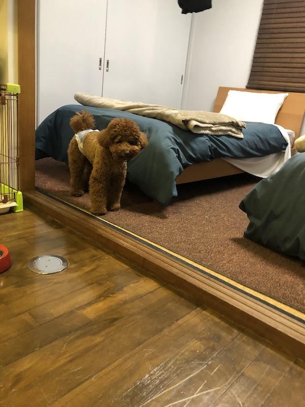 淡路島ホテルヴィラオルティージャの部屋の写真